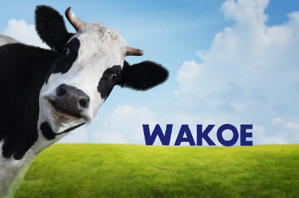 flyer wakoe
